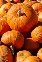 Pumpkin Collection